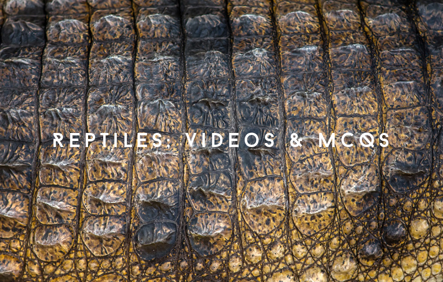 Course Image Reptiles, with videos & MCQs