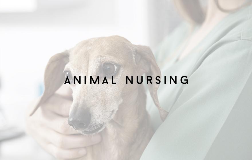 Course Image Animal nursing