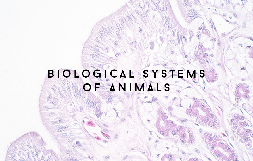Course Image Biological systems of animals