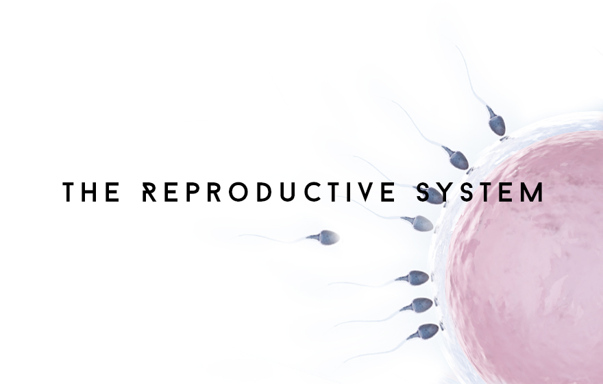 Course Image The Reproductive system